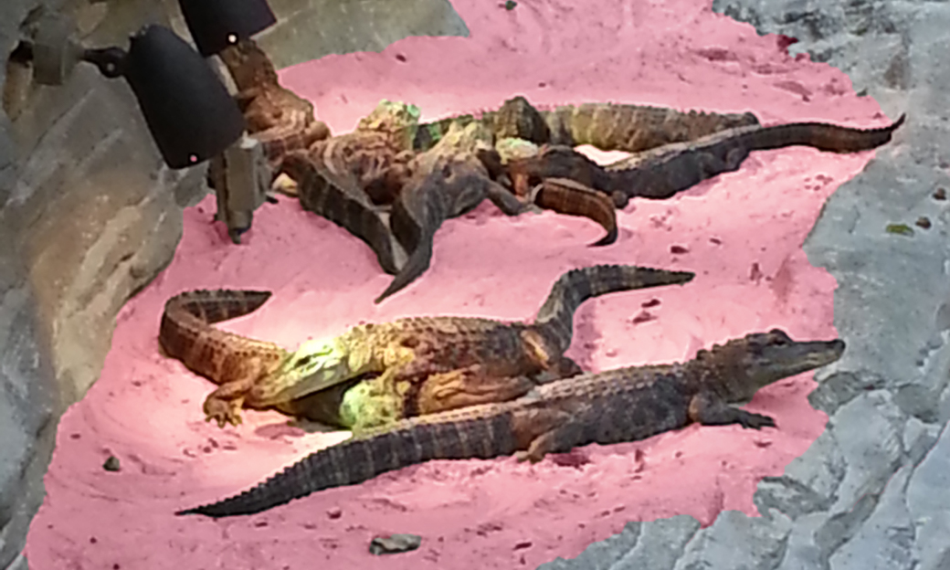 Alligators on pink sand